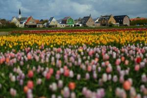 Texel_1240